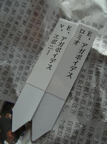 DSC07604.jpg