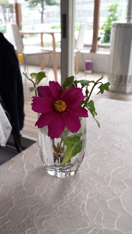 お庭のお花かな