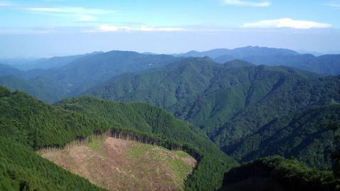 風張林道2