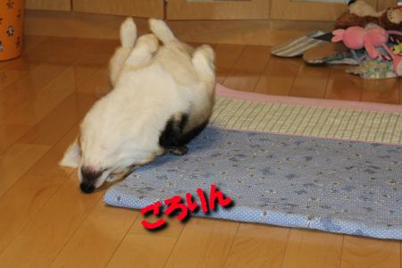 biddy201106-08