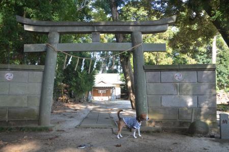 20131111宗像神社 吉田05