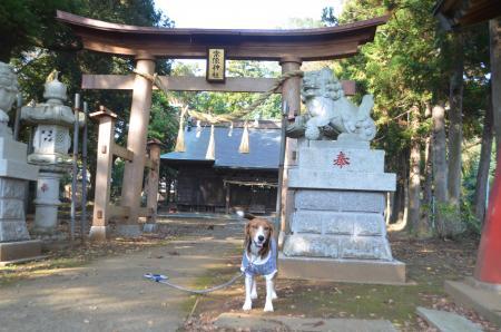 20131111宗像神社 岩戸04