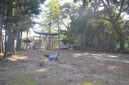 20131111宗像神社 岩戸18