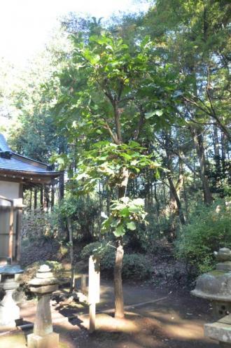0131116宗像神社 平賀17
