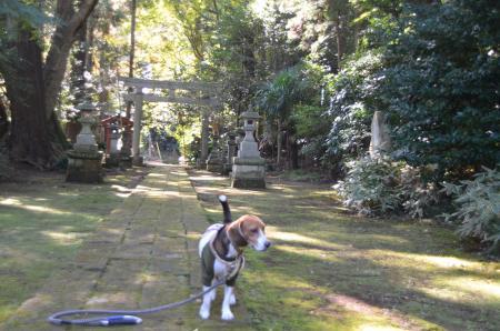 20131116宗像神社 吉高11