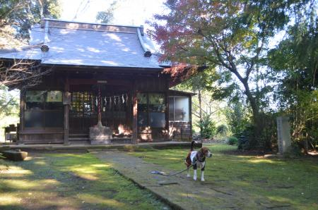 20131116宗像神社 吉高16