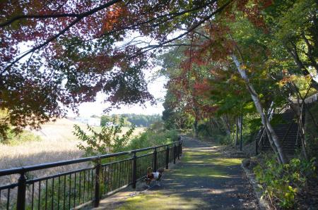 20131116松虫姫公園12