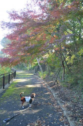 20131116松虫姫公園10