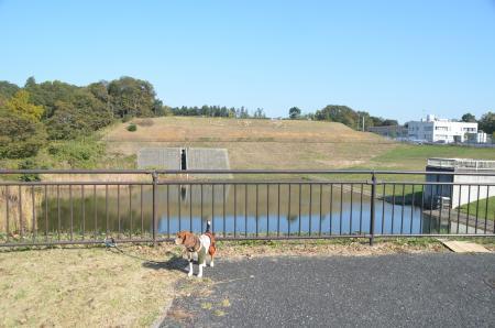 20131116松虫姫公園15