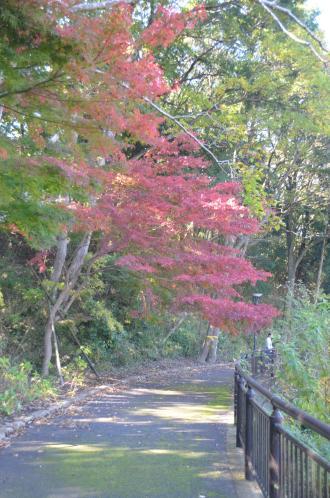 20131116松虫姫公園13