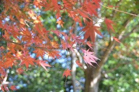 20131116松虫姫公園24