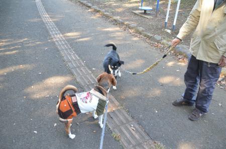 20131116松虫姫公園29