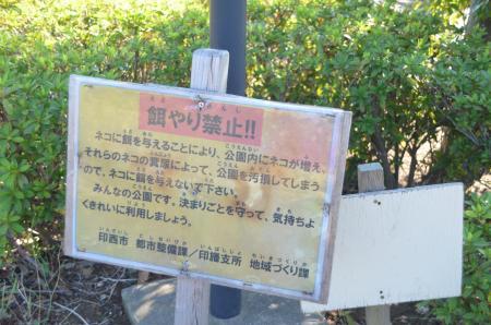 20131116松虫姫公園27