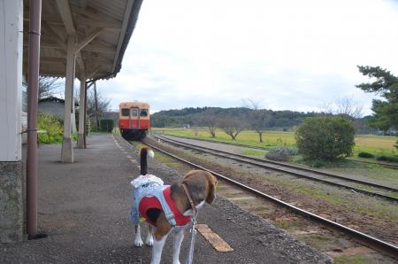 20131119小湊鉄道鶴舞駅17