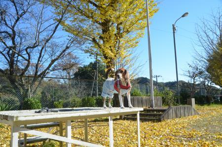 20131119富山小学校18