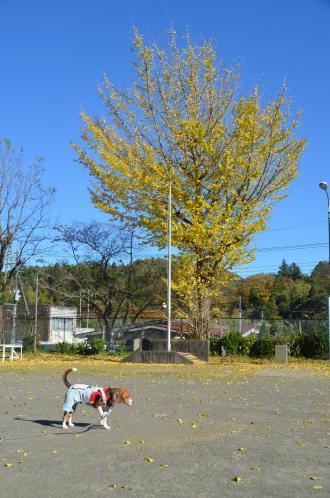 20131119富山小学校14