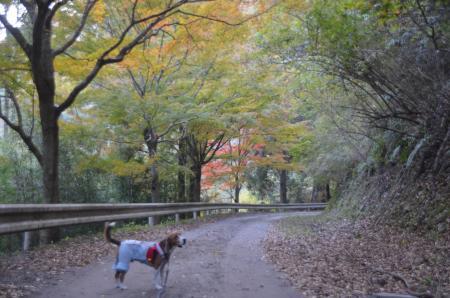 20131119養老渓谷八景 梅ヶ瀬渓谷05