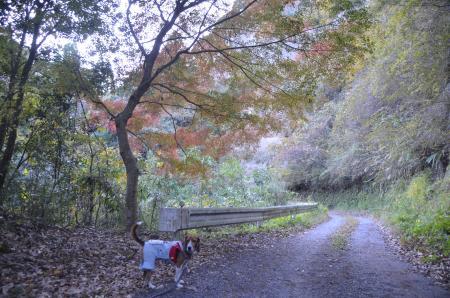 20131119養老渓谷八景 梅ヶ瀬渓谷03