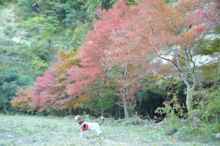 20131119養老渓谷八景 梅ヶ瀬渓谷07