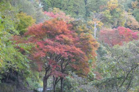 20131119養老渓谷八景 梅ヶ瀬渓谷16