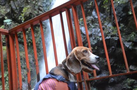 20131123塩川の滝10