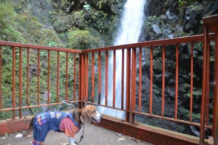 20131123塩川の滝08