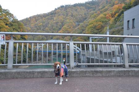 20131123宮ケ瀬ダム11