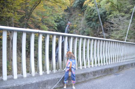 20131123大沢の滝04