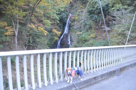 20131123大沢の滝07