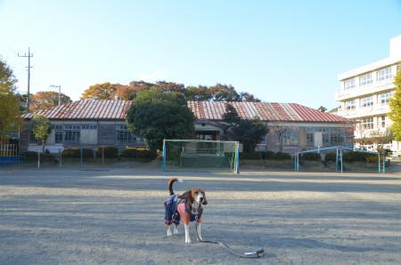 20131123半原小学校05