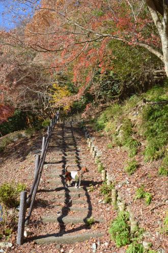 20131129丹沢湖15