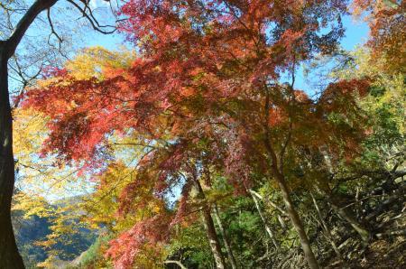 20131129丹沢湖24