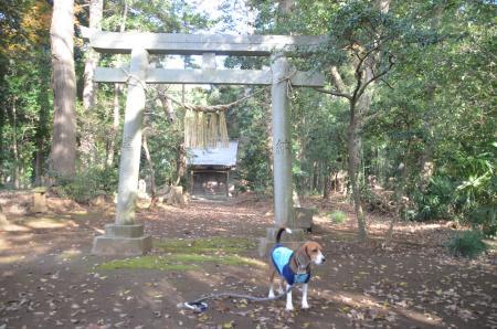 20131208宗像神社 大廻04