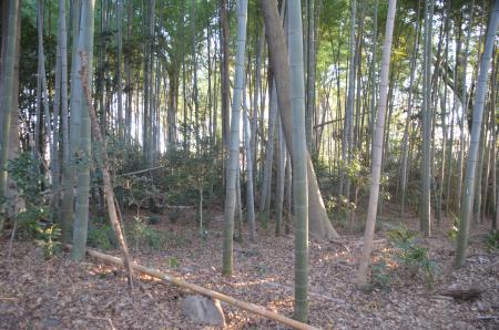 20131216三田氏館跡15