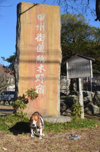 20131216小仏の関07