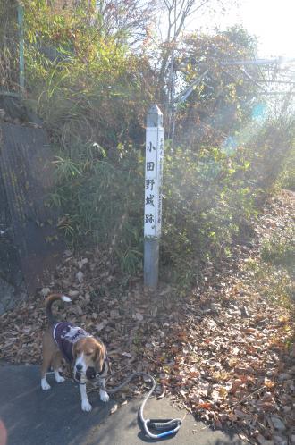 20131216小田野城址16