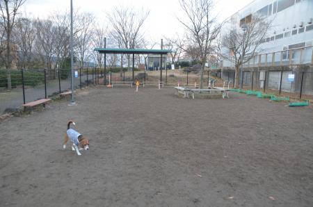 20131224足柄SAドッグラン10