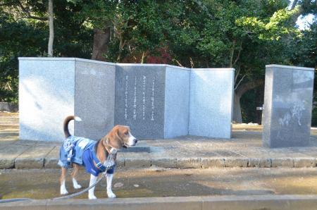 20131225伊東公園17