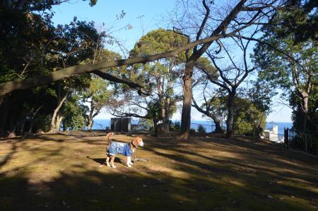 20131225伊東公園15