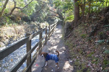 20131225対馬の滝02