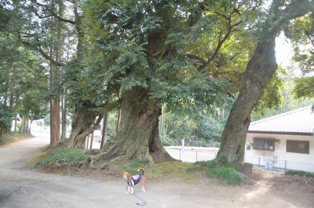 20140104印旛七福神⑦12