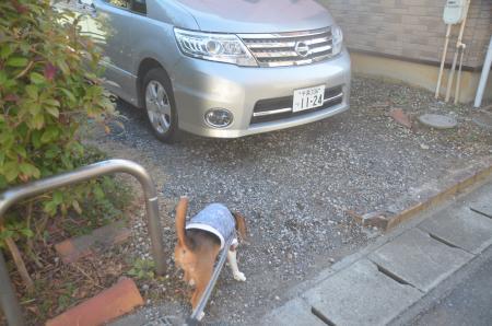 20140111佐倉城址公園03