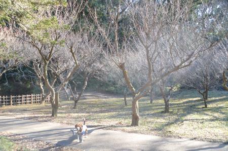 20140111佐倉城址公園15