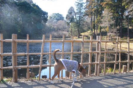 20140111佐倉城址公園14