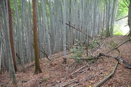 20141026妙見神社成田芦田16