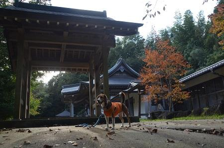 20141026 妙見神社 成田小泉11