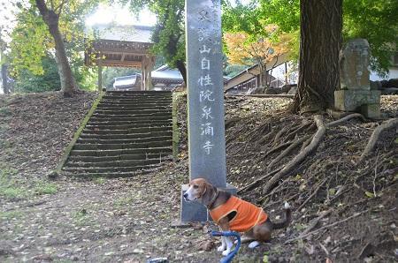 20141026 妙見神社 成田小泉09
