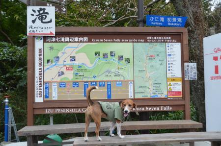 20141027河津七滝①カニ滝01