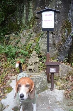 20141027河津七滝②初景滝05