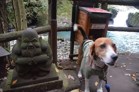 20141027河津七滝③蛇滝06